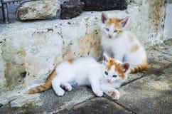 Leuke en mooie katjes die en buiten hun huis in bruin spelen onderzoeken, zwart en grijs stock fotografie