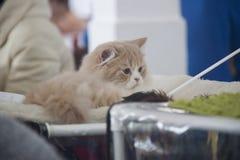 Leuke en mooie katten Stock Fotografie
