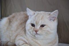 Leuke en mooie katten Royalty-vrije Stock Foto