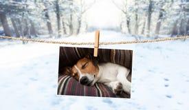 Leuke foto van hond op koord in de winter stock foto