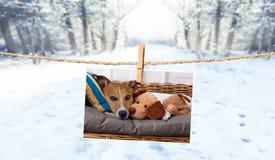 Leuke foto van hond op koord in de winter stock fotografie