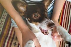 Leuke gelukkige grappige hond in de wapens van zijn maitresse royalty-vrije stock afbeeldingen