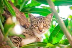Leuke gestreepte kat Kitten Relaxing royalty-vrije stock foto's