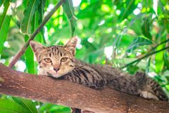 Leuke gestreepte kat Kitten Relaxing stock foto