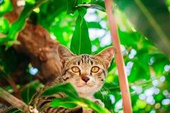 Leuke gestreepte kat Kitten Relaxing royalty-vrije stock fotografie