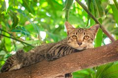 Leuke gestreepte kat Kitten Relaxing stock fotografie