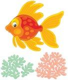 Leuke gouden vissen met een goed gehumeurde glimlach Stock Afbeelding