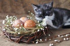 Leuke grijs weinig katje naast de paaseieren de natuurlijke rode kleur met grafische druk van witte verf in een rieten nest, en stock afbeelding
