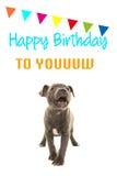 Leuke grijze het puppyhond die van de staffordterriër gelukkige verjaardag aan u op een verjaardagskaart zingen Stock Afbeelding