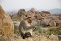Leuke grote aap die banaan in de wildernis op de achtergrond van natuurstenen eten stock foto
