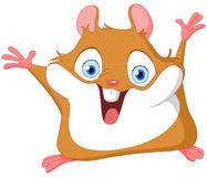 Leuke hamster Stock Foto's