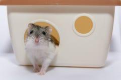 Leuke Hamster Royalty-vrije Stock Afbeelding