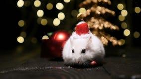 Leuke hamster met santahoed op bsckground met Kerstmislichten stock video