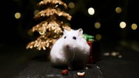 Leuke hamster met santahoed op bsckground met Kerstmislichten stock footage
