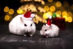 Leuke hamster met santahoed op bsckground met Kerstmislichten stock afbeeldingen