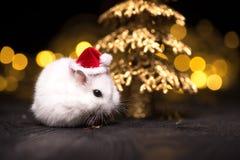 Leuke hamster met santahoed op bsckground met Kerstmislichten stock afbeelding