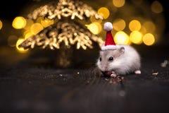 Leuke hamster met santahoed op bsckground met Kerstmislichten stock fotografie