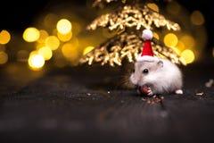 Leuke hamster met santahoed op bsckground met Kerstmislichten stock foto