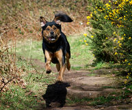 Leuke Hansome die hond het springen kijken royalty-vrije stock afbeelding