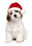 Leuke havanese het puppyhond van Kerstmis Royalty-vrije Stock Foto's