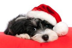 Leuke havanese het puppyhond van Kerstmis Royalty-vrije Stock Fotografie