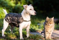 Leuke hefboom russel hond en binnenlandse katjes beste vrienden stock afbeelding