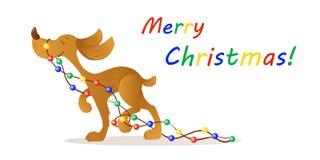 Leuke het glimlachen gele hond het dragen Kerstmislichten stock fotografie