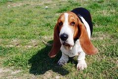 Leuke hond royalty-vrije stock fotografie