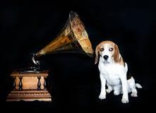 Leuke hond Stock Foto
