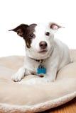 Leuke Hond Stock Fotografie