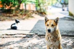Leuke hond Royalty-vrije Stock Foto's