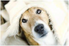 Leuke hond royalty-vrije stock foto
