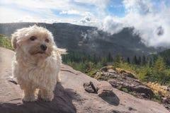 Leuke hond alleen op een bergpiek Royalty-vrije Stock Fotografie