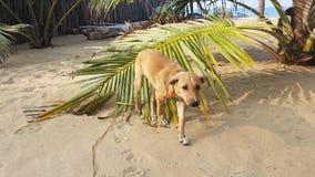 Leuke Hond dichtbij Palmblad stock foto's
