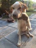 Leuke hond die hand geven Stock Afbeelding