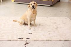Leuke hond die modderige pootdrukken verlaten stock fotografie