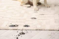 Leuke hond die modderige pootdrukken verlaten royalty-vrije stock fotografie