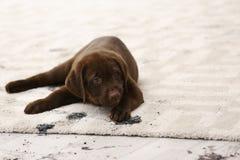 Leuke hond die modderige pootdrukken verlaten stock afbeeldingen