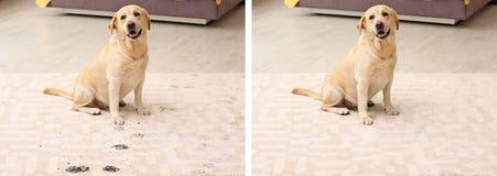Leuke hond die modderige pootdrukken verlaten royalty-vrije stock afbeeldingen