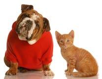 Leuke hond en kat stock foto