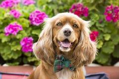 Leuke hond, huisdier stock fotografie