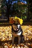 Leuke hond met bladeren in de herfstpark stock fotografie
