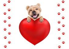 Leuke hond met het gebreide hoed hangen met poten op het grote die hart van de valentijnskaart` s dag, op witte achtergrond wordt Royalty-vrije Stock Afbeeldingen