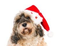 Leuke hond met Kerstmanhoed Stock Afbeeldingen