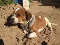 Leuke hond met staalketting royalty-vrije stock foto's