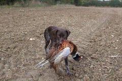 Leuke hond met vogel Stock Foto's