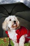 Leuke hond onder paraplu royalty-vrije stock foto