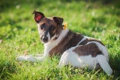Leuke hond op het gras Huisdier op de aardachtergrond Royalty-vrije Stock Foto