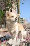 Leuke hond in openlucht Royalty-vrije Stock Afbeelding