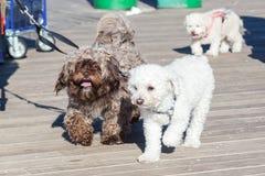 Leuke honden bij de leiband royalty-vrije stock afbeelding